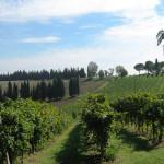 Colline di Faenza