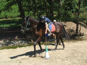 Corso equitazione da campagna